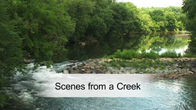 Scenes from a Creek